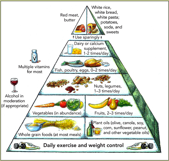 food pyramid from Harvard University